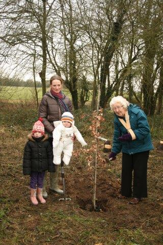 Planting an Oak tree near All Saint's Bus Shelter